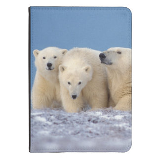 polar bear, Ursus maritimus, sow with cubs Kindle Touch Cover