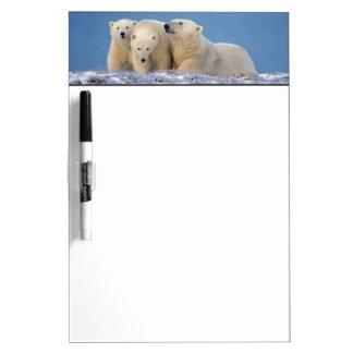 polar bear, Ursus maritimus, sow with cubs Dry-Erase Board