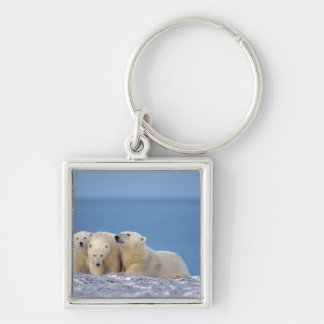 polar bear, Ursus maritimus, sow with cubs Keychain