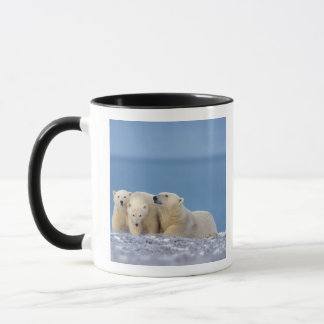 polar bear, Ursus maritimus, sow with cubs Mug