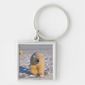 polar bear, Ursus maritimus, sow with cubs on 2 Keychain