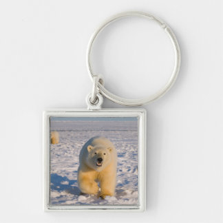 polar bear, Ursus maritimus, sow with cubs on 2 Silver-Colored Square Keychain