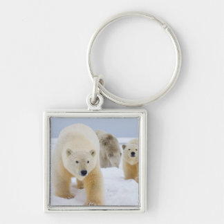 polar bear, Ursus maritimus, sow with cubs on 3 Keychain