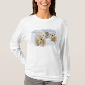 polar bear, Ursus maritimus, sow with cubs on 3 T-Shirt