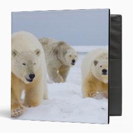 polar bear, Ursus maritimus, sow with cubs on Binder
