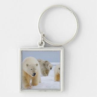 polar bear, Ursus maritimus, sow with cubs on Keychain