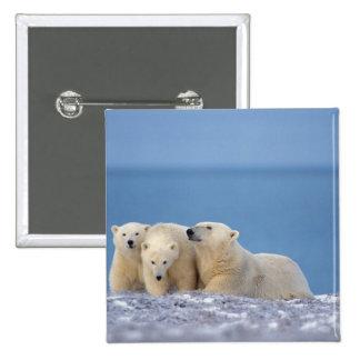 polar bear, Ursus maritimus, sow with cubs Pinback Button