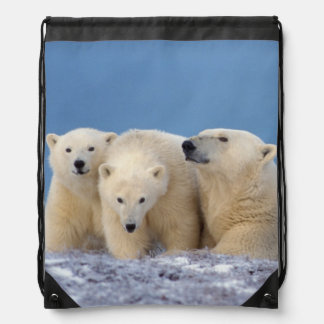 polar bear, Ursus maritimus, sow with cubs Backpack