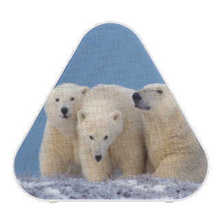 polar bear, Ursus maritimus, sow with cubs Speaker