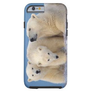 polar bear, Ursus maritimus, sow with cubs Tough iPhone 6 Case