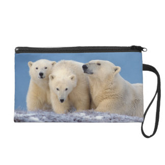polar bear, Ursus maritimus, sow with cubs Wristlet Purse