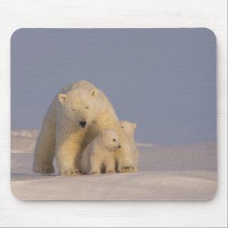 polar bear, Ursus maritimus, sow with newborn 2 Mousepads