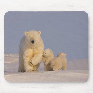 polar bear, Ursus maritimus, sow with newborn 3 Mouse Pad