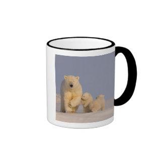 polar bear, Ursus maritimus, sow with newborn 3 Mugs