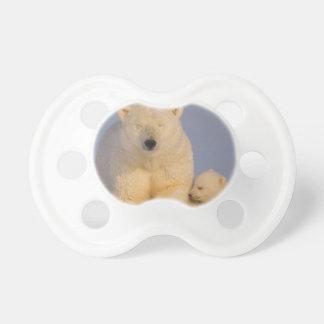 polar bear, Ursus maritimus, sow with newborn 3 Pacifier