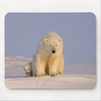 polar bear, Ursus maritimus, sow with newborn Mouse Pad