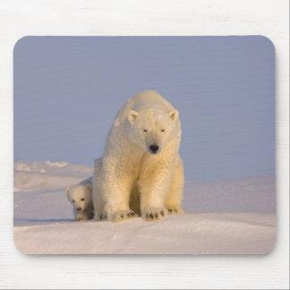 polar bear, Ursus maritimus, sow with newborn Mousepad