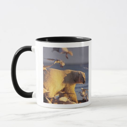 polar bear, Ursus maritimus, with Mug