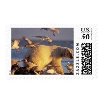 polar bear, Ursus maritimus, with Postage