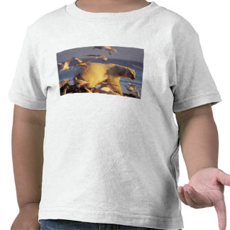 polar bear, Ursus maritimus, with T-shirts