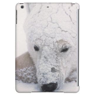 Polar Bear, Urus Maritimus, Arctic, Churchill, Case For iPad Air