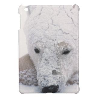 Polar Bear, Urus Maritimus, Arctic, Churchill, Cover For The iPad Mini