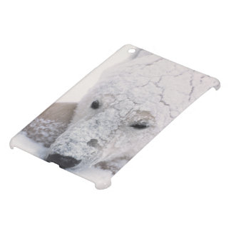 Polar Bear, Urus Maritimus, Arctic, Churchill, iPad Mini Cases