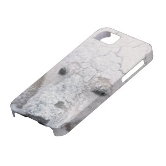 Polar Bear, Urus Maritimus, Arctic, Churchill, iPhone SE/5/5s Case