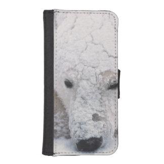 Polar Bear, Urus Maritimus, Arctic, Churchill, iPhone SE/5/5s Wallet Case