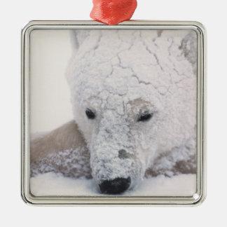 Polar Bear, Urus Maritimus, Arctic, Churchill, Metal Ornament
