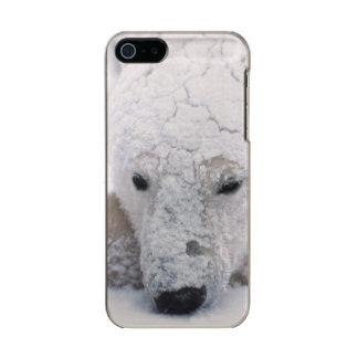 Polar Bear, Urus Maritimus, Arctic, Churchill, Metallic iPhone SE/5/5s Case