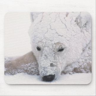 Polar Bear, Urus Maritimus, Arctic, Churchill, Mouse Pad