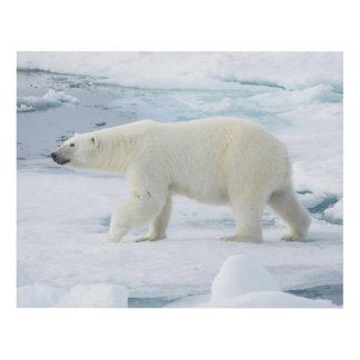 Polar bear walking, Norway Panel Wall Art