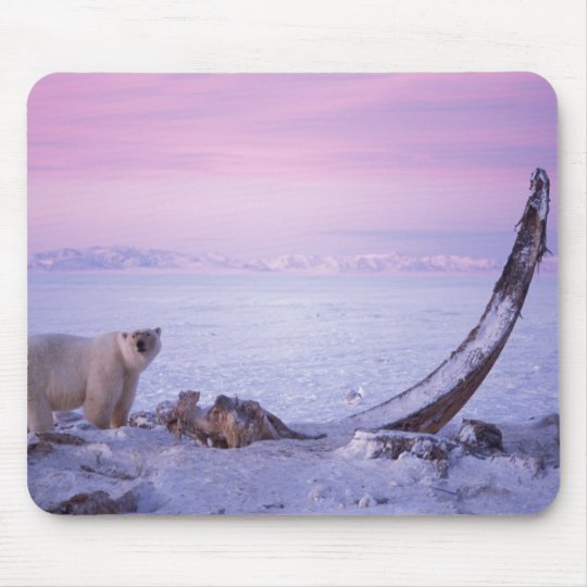 Polar bear with bowhead whale carcass on pack mouse pad