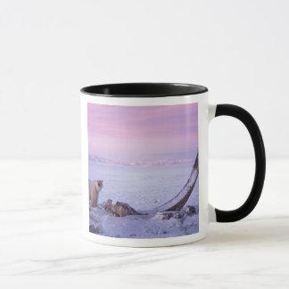 Polar bear with bowhead whale carcass on pack mug