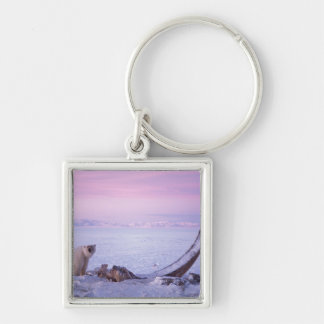 Polar bear with bowhead whale carcass on pack Silver-Colored square keychain
