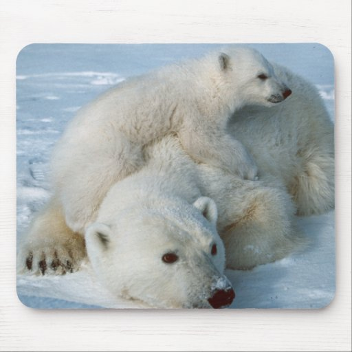 Polar_bear_with_cub Mouse Mats