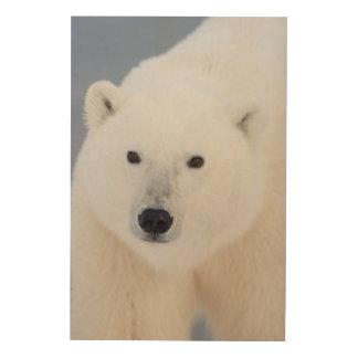 Polar Bear Wood Canvases