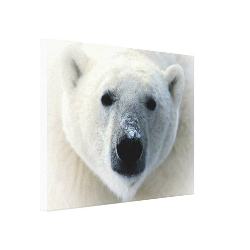 Polar Bear Wrapped Canvas Canvas Prints