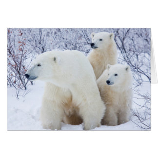 Polar Bears and Two cubs Card