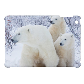 Polar Bears and Two cubs iPad Mini Cases