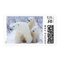 Polar Bears and Two cubs Postage