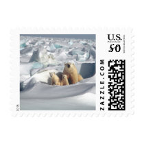Polar Bears Arctic Wildlife Animals Postage