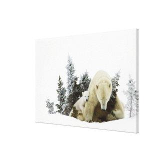 Polar Bears At Wapusk National Park Canvas Print