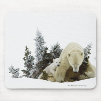 Polar Bears At Wapusk National Park Mouse Pad