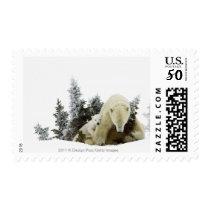 Polar Bears At Wapusk National Park Postage