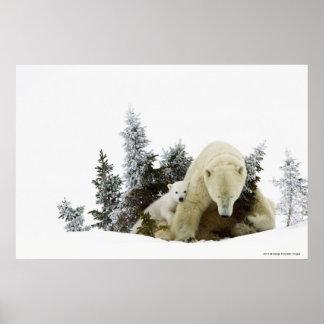 Polar Bears At Wapusk National Park Poster