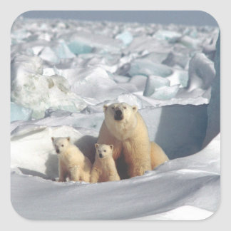 Polar Bears Cubs Arctic Wildlife Animals Stickers