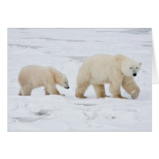Polar Bears female and Two cubs 2 Card