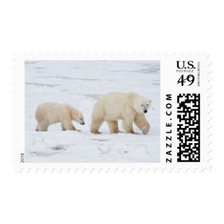 Polar Bears female and Two cubs 2 Postage